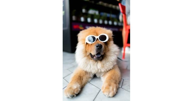 株式会社ルースターの「ペット(犬・猫)」に特化したInstagram(インスタグラム)インフルエンサーPRサービス