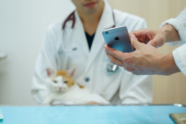tolettaのアプリをかかりつけ獣医師に見せながら治療を受ける-トレッタキャッツ