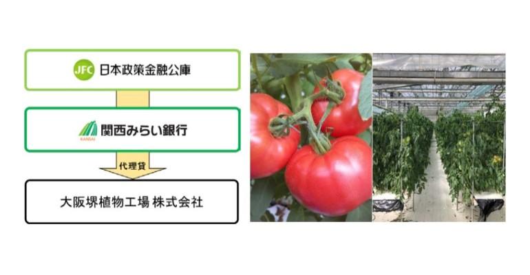 関西みらい銀行が堺市で植物工場を運営する大阪堺植物工場株式会 社(社長 山口 利昭)に対し、新規事業である「フルーツトマト」の生産等に必要となる設備及び運 転資金を協調融資