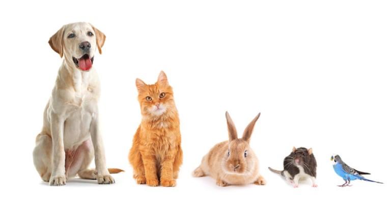 猫の種類、犬の種類 人気のペット ランキング 2020年