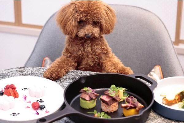 ヒルトン名古屋、獣医師監修の犬用コースメニュー